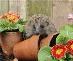 5B130 Hedgehog and Pots